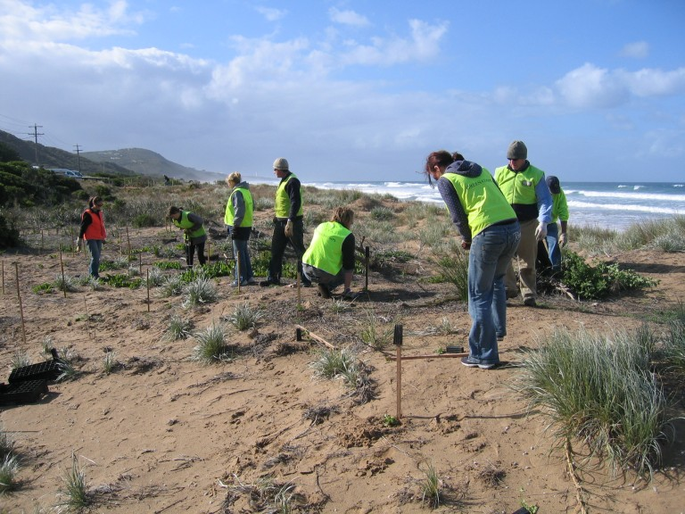 Coastal volunteers in action