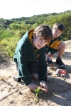 Torquay College students planting out the dunes.