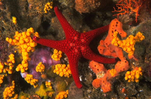 Sea Star (Photographer Bill Boyle)