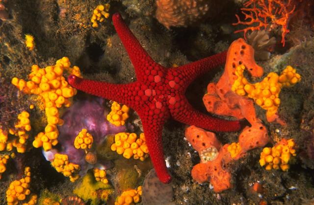 Sea Star (Photographer Bill Boyle)
