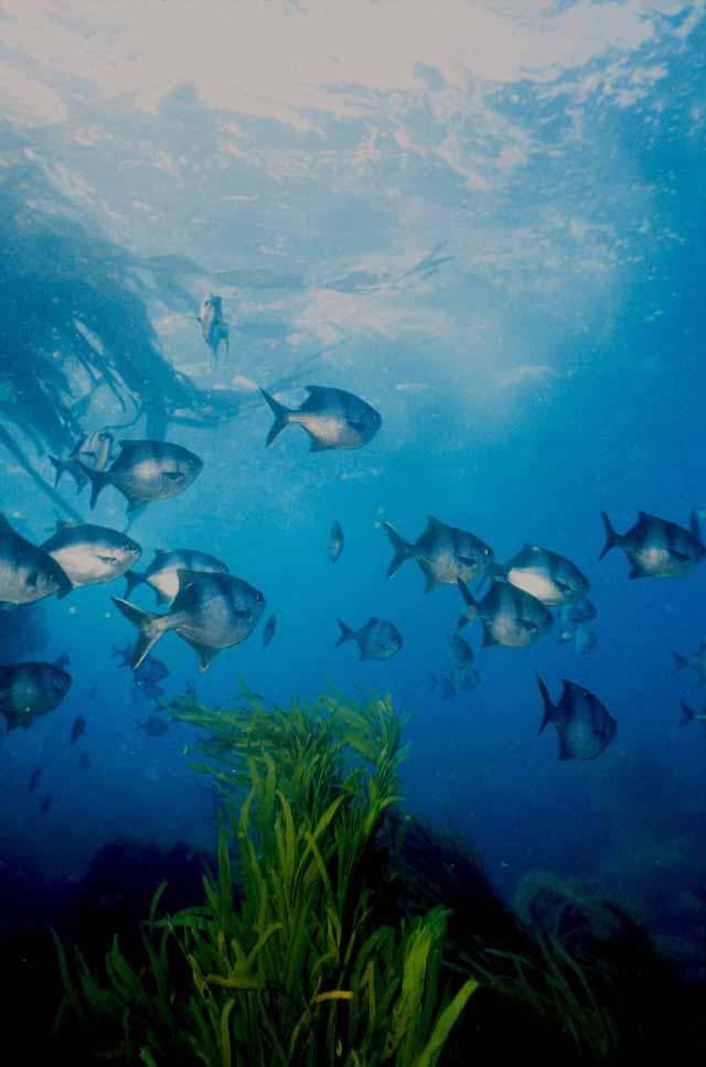 Sea Sweep (Photographer Phillip Doak)