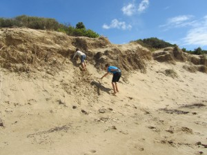Beachgoers and dunes at risk