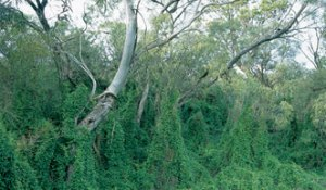 Input sought on Otways biodiversity