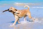dog-on-the-beach[1]