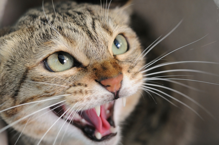 The Surf Coast Shire has a cat curfew to protect native wildlife.