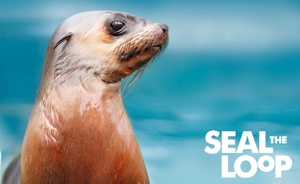 Community members are urged to use Melbourne Zoo's Seal the Loop bins designed for the collection of fishing waste so seals do not become entangled. Photo: www.zoo.org.au