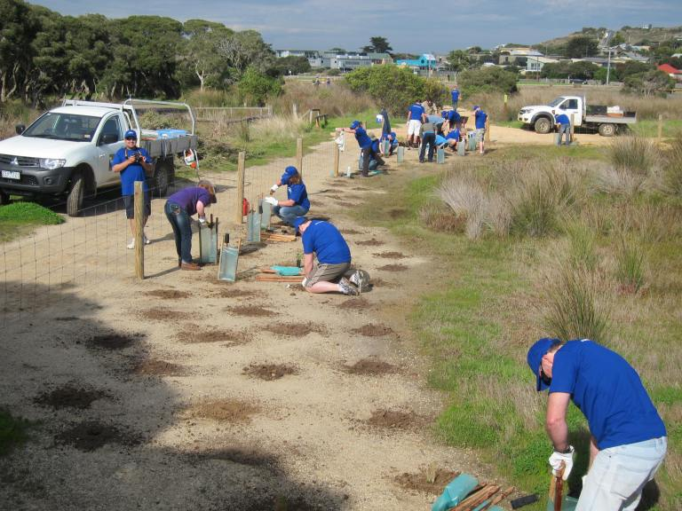 Ford volunteers planting at Anglesea. Photo: Abhishek Sharma.