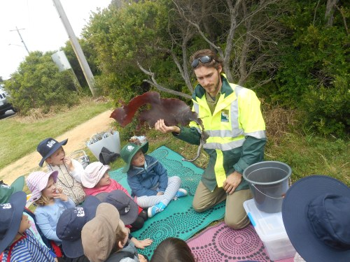 Conservation Team member Peter Crowcroft shows some kelp the Jan Juc Pre School kids