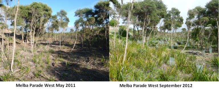 Melba Parade, the Anglesea site where the seven-year restoration project has been taking place, has seen significant improvements over the years.