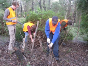 TAFE students working hard at removing harmful weeds on the outskirts of Anglesea.