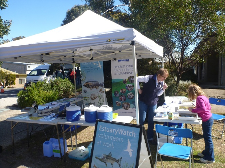 The EstuaryWatch marquee was popular amongst children, with the Water Big activity allowing children to view tiny animals in their natural marine habitat.