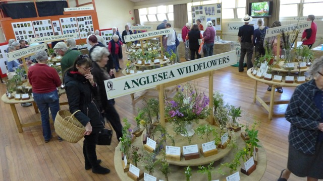 The indigenous orchids were hugely popular over the weekend.