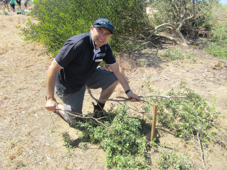Phil Armetto will plant existing shrubbery around the young, indigenous plants to help protect them as they grow.