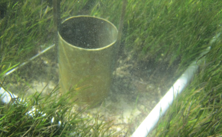Sieving seagrass sediment sample to look for seeds. Photo: Tim Smith