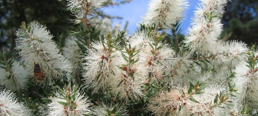 Winter weed blitz