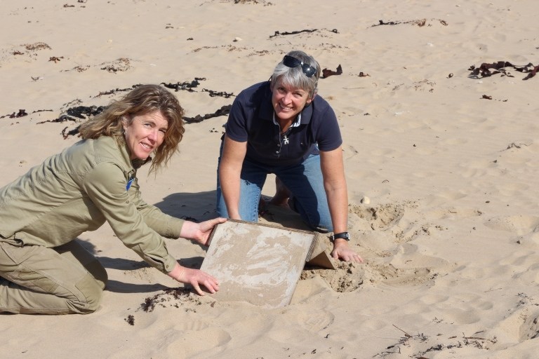 FHPSC Regional Coordinator Sue Guinness and GORCC Conservation Supervisor Georgie Beale dig in some hoodie shelters to help with chicks and adults survival.