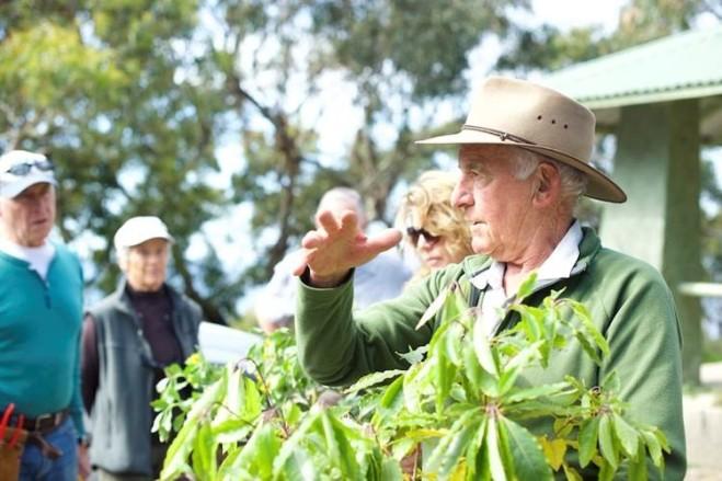 John Wilson and sweet pittospurum