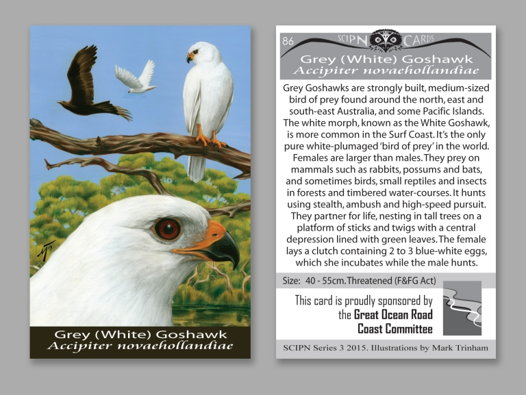 The Grey Goshawk is one of the many birds featured in the SCIPN Widlife Card Collection.