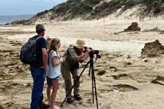 GORCC Conservation Supervisor Georgie Beale sets up the telescopic scope to view the vulnerable Hooded Plover nest at Point Roadknight.