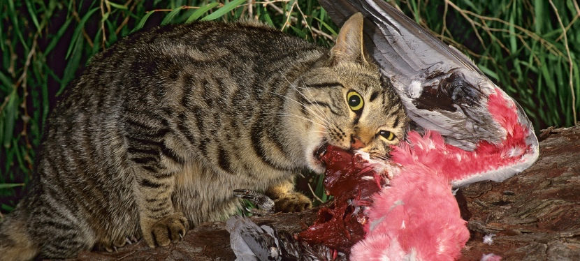 New technology helps track feral cats