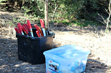 Some of the tools students used for removing the invasive Coastal Tea Tree.