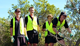 These four students wrestled with a difficult weed before successfully removing the plant for mulching.