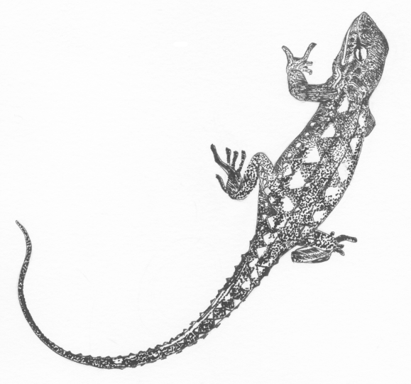 Jacky Lizard