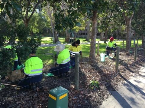 lorne-caravan-park-garden-bed-planting-9