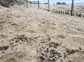 footprints-near-nest-jan-7-1