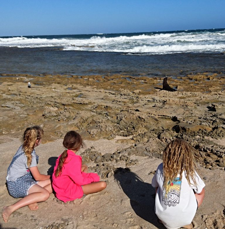 Seal Watching