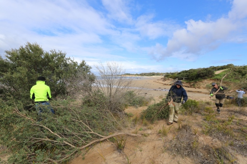 Gordon TAFE students help remove woody weeds near Deep Creek