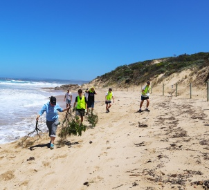 Sandringham College students help brush mat the dune blowouts at Point Roadknight to prevent illegal access.