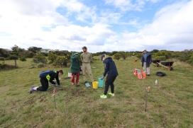 MacKillop College students help remove invasive species in the Jan Juc grasslands.