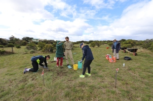 MacKillop College students help remove invasive species in the Jan Juc grasslands.