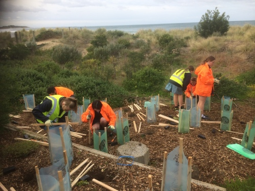 Planting continues at Fishermans Beach.