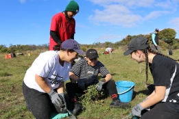 MacKillop College help weed the Jan Juc grasslands
