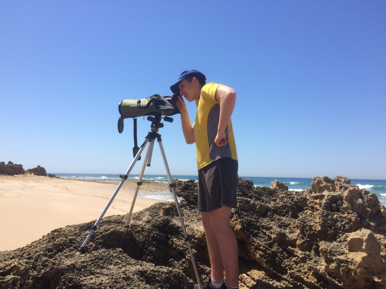 Monitoring the threatened Hooded Plover shorebird. during nesting season.