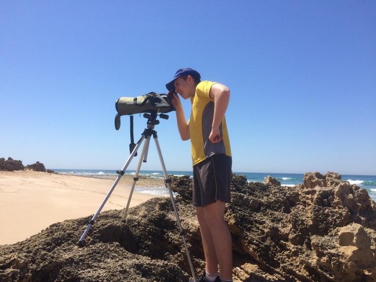 Monitoring the threatened Hooded Plover shorebird. during nesting season.