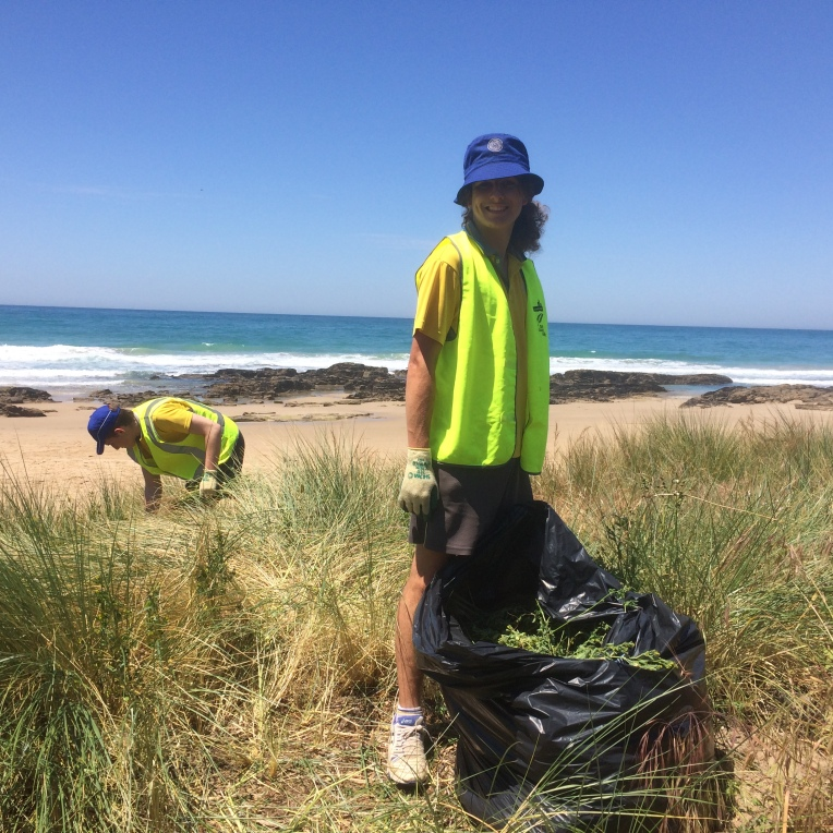 Clearing the dunes of invasive plant species.