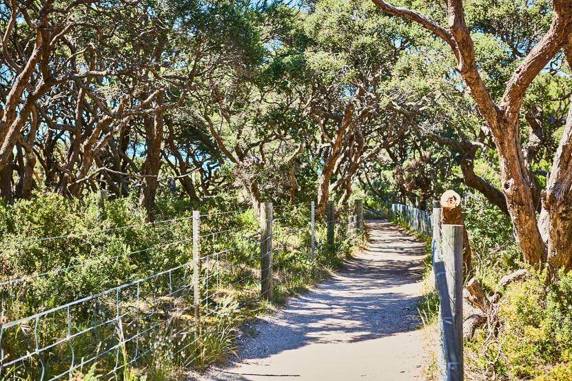 Caring for our precious Coastal MoonahWoodland