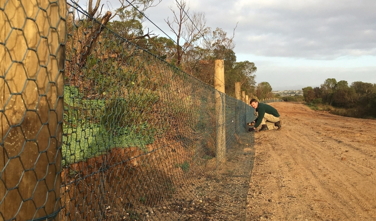 pegging-down-rabbit-proof-fence-near-pt-impossible_edit-e1563771418651.jpg