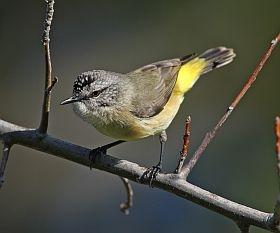 Coast Guardians twitch for Aussie Backyard BirdCount